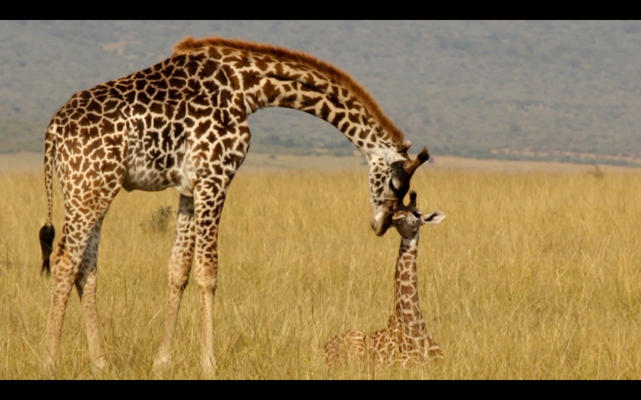 Kenya Vlog 09 & 10 – Safari | Leopards, Rhinos, and Warriors